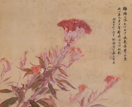 陶冷月 鸡冠花