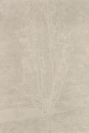 韩冬   春天的桃树之一